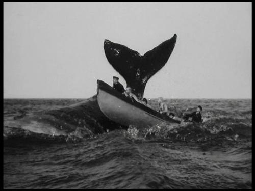 whales big